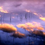 Молчание Фиолетово-Сине